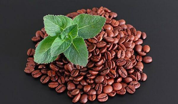 انتاج اول قهوة بالنعناع بدلاً من الكافيين
